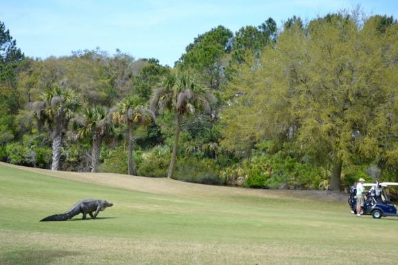 """""""Динозавър"""" уплаши голфъри в САЩ (видео)"""